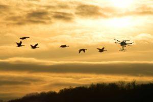 перелётные птицы и дрон для охоты с тепловизором